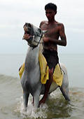 Naked men with their horses, foto7, riding small pony on the beach.